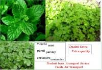 Bio menta verde de Marruecos