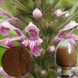 100% pure natural Leonurus heterophyllus Sweet extract/Stachydrine,Leonurine