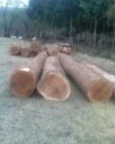 Venta de Maderas duras tropicales en troncos