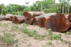 Venta de Ébano brasileño / Guayacán en troncos
