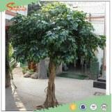 Songtao fiberglass fake artificial oak bonsai tree for indoor and outdoor deocr