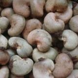 Africa raw cashew nuts supplier