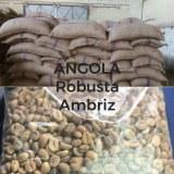 Café Verde Robusta