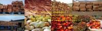 En vente Bois / Cajoux en grande quantité