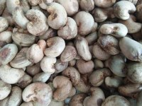 2017/2018 Season Of Quality Raw Cashew Nuts Para la venta