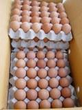 Huevos de gallina frescos para la venta