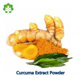 Price curcuma longa extract 95% curcumins powder