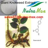 Giant Knotweed Rhizome extract (sales07@nutra-max.com)