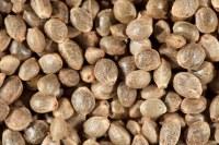 Las semillas de cáñamo sin cáscara