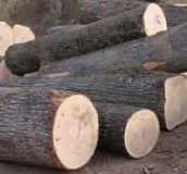 Timber logs, lumber and pellet