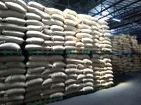 Venta de granos de café verde robusta hechos en Costa de Marfil