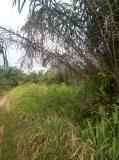 Terrenos agrícolas en venta en Costa de Marfil
