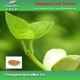 100% Natural Indigowoad Leaf Extract 5:1 (sales07@nutra-max.com)