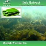 Kelp Extract Fucoxanthin (sales07@nutra-max.com)