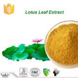 Natural weight loss 0.5%n nuciferine Lotus Leaf Extract