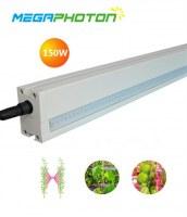 Megaphoton 150W LED crece la luz de efecto invernadero interlighting 8 proyectos de ilu...