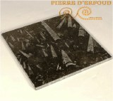 Baldosas de mármol fosilizado
