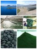 Producteur grossiste de Spiruline naturelle et écologique en poudre ou comprimés