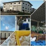 VCO, leche de coco (coco a granel / harina), cáscara de coco, carbón de coco, fibra de...