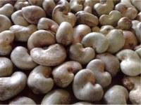 Nueva temporada de anacardos crudos para la venta