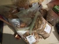 Raíces de Iboga secas / Palo medicinal de Iboga