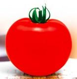 T43 Hongrui enorme hybird fruta f1 semillas de tomate de color rojo para la venta