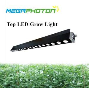 Megaphoton 200W 4ft top LED crece la luz para horticultura y floricultura en proyectos...