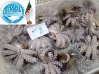 Productos del mar y mariscos