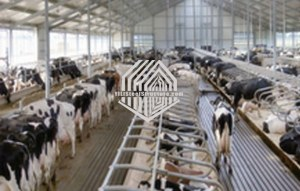 Casa de vaca de estructura de acero con CE en China en venta